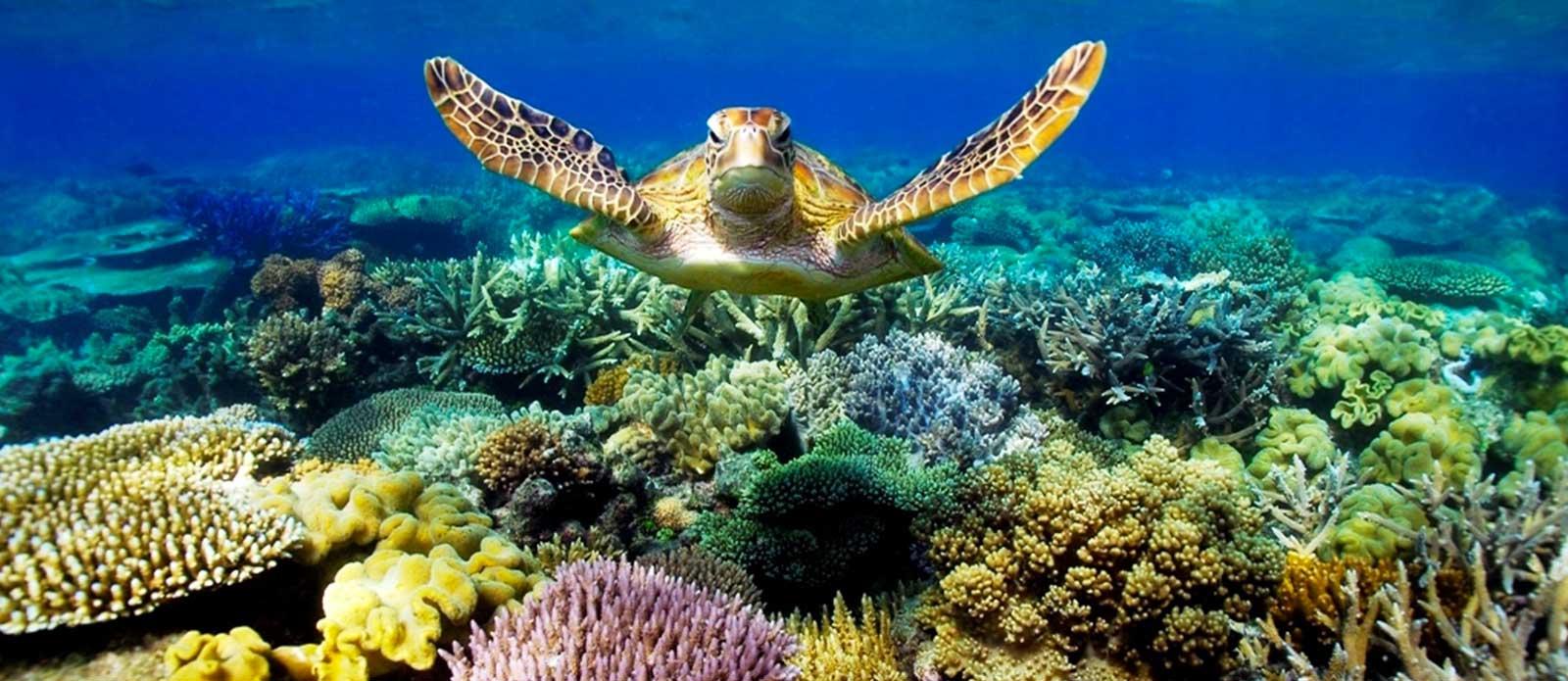 CZ Trattamento Acque - Blog - Gli effetti dell'acidificazione degli oceanisugli animali - Tartaruga che nuota nel mare con barriera corallina e vegetazione